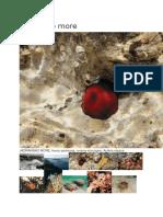 Biocenoza Jadranskog Mora