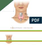 anatomyofthyroidgland-2-140129144245-phpapp02.pptx