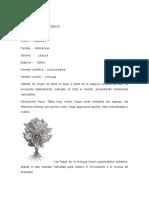 Etimologia
