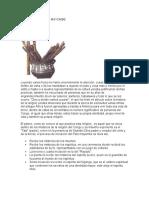 HABLEMOS DE PALO MAYOMBE.docx