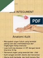 skin integument 1.pptx