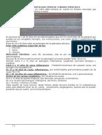 Patologia Cervical o Masas Cervicales_6b425e