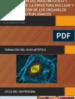 huso_mitotico_envol_nuclear.pptx