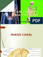 Coxal y Miembro Inf
