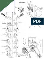 Aedes alboapicus.pdf