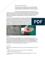 DETERMINACION ACTUAL DEL LIMITE PLASTICO.docx