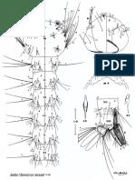 Aedes Alcasidi