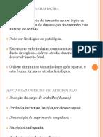 PATOLOGIA 2