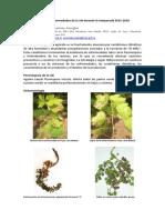 peronospora-botrytis_2015-2016.pdf