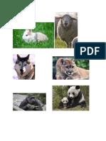 Animals Categories