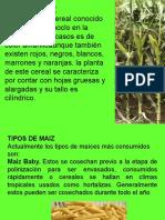 Exposicion Del Maiz