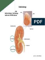 Glomerularna filtracija i stvaranje mokrace