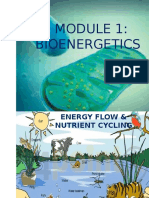 Bioenergetics lesson 1.pptx