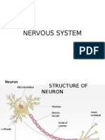 nervous system lecture.pptx