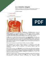 ntestino grueso e intestino delgado.docx