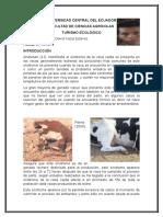 Sindrome de La Vaca Caida