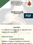 SISTEMA ÓSSEO.ppt