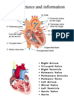 heart-pictures-and-information