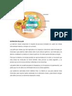 Nutricion Celular
