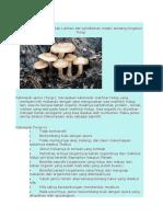 Soal Fungi 1