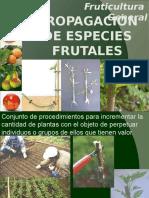 2.Propagacion de Especies Frutales
