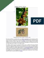 Etimología de La Palabra Cacao