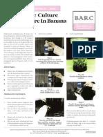 Banana TC3