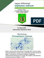 Presentasi Mikologi t. Rubrum