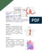 Arteria Hepática