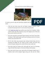 Memilih Anakan Ikan Louhan Berkualitas