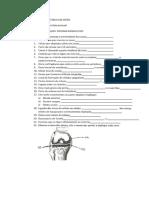 Exercícios de Fixação - Sistema Esquelético.docx
