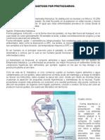 Parasitosis Por Protozoarios