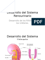 Desarrollo Del Sistema Renourinario