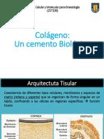 colageno_miniclase