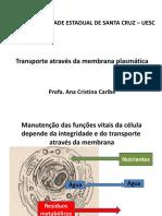Aula Membrana Plasmática e Transporte