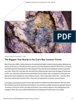 The Biggest Tree Stump in the Curio Bay Jurassic Forest - Mike Pole.pdf