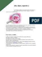 Rosas y rosales.pdf