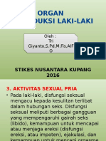 2. Aktivitas Sexual Pria