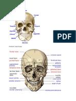 Anatomi Skull Base
