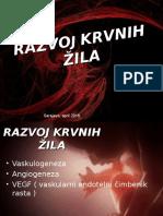 razvoj krvnih zila