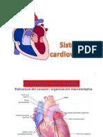4 Clase Cardiovascular