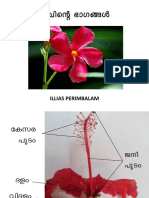 Parts of Flower-1