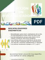 BIOCATALIZADORES.docx