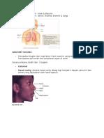Anatomi Hidung Dan Upper & Lower Respiratory System