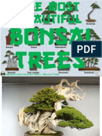 Www.nicepps.ro_24584_The Most Beautiful Bonsai Trees