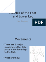 Muscles of the Foot and Lower Leg - Updated1