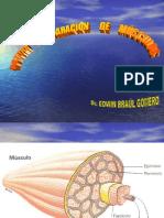 Músculos-y-Tendones-Reparac.-y-Técnic-PPTminimizer (1)