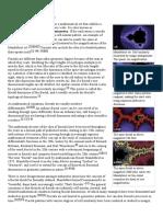 Fractal - Wikipedia, The Free Encyclopedia