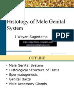 Male Genital System Histology PSPD 2015