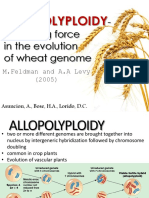 Allopolyploidy of Wheat